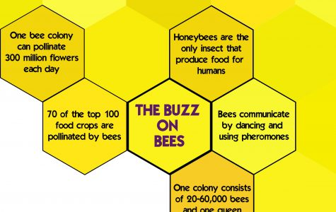 'Honey, we shrunk the bee population': Essential insects overlooked by society